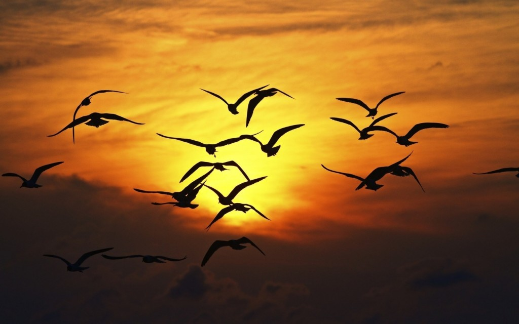 images-of-birds-flying-in-the-sky